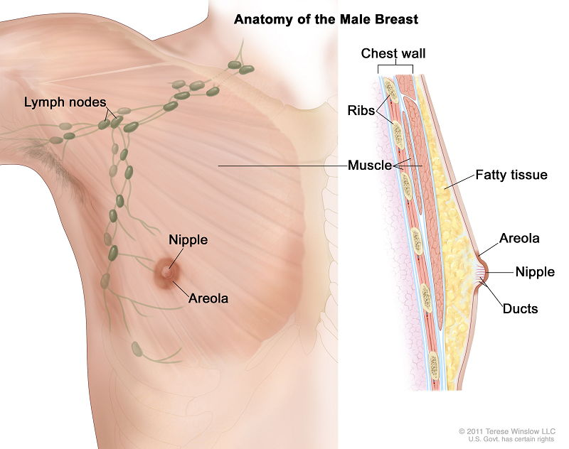 Image Can Asbestos Cause Breast Cancer